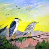 """""""Black Crowned Night Herons"""""""