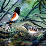 """""""Spotted Towhees"""""""